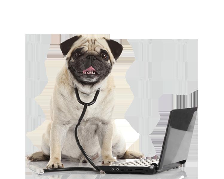 Perro de Sultan